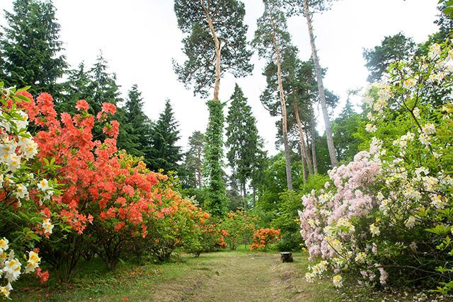 Zdjęcie przedstawia ścieżkę pośród kwiecistych krzewów i drzew różnych gatunków.