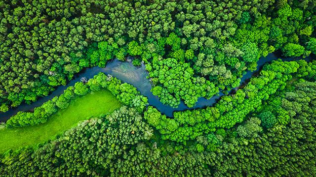 Zdjęcie przedstawia widok z góry na rzekę w lesie.