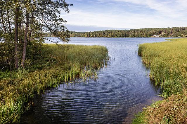 Zdjęcie przedstawia rzekę wpływającą do jeziora pośród traw i drzew.