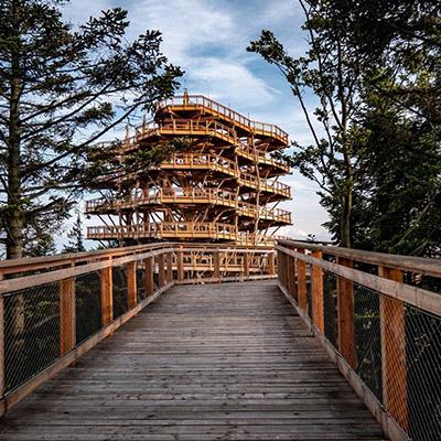 Zdjęcie przedstawia drewniane konstrukcje pomostów pomiędzy drzewami.